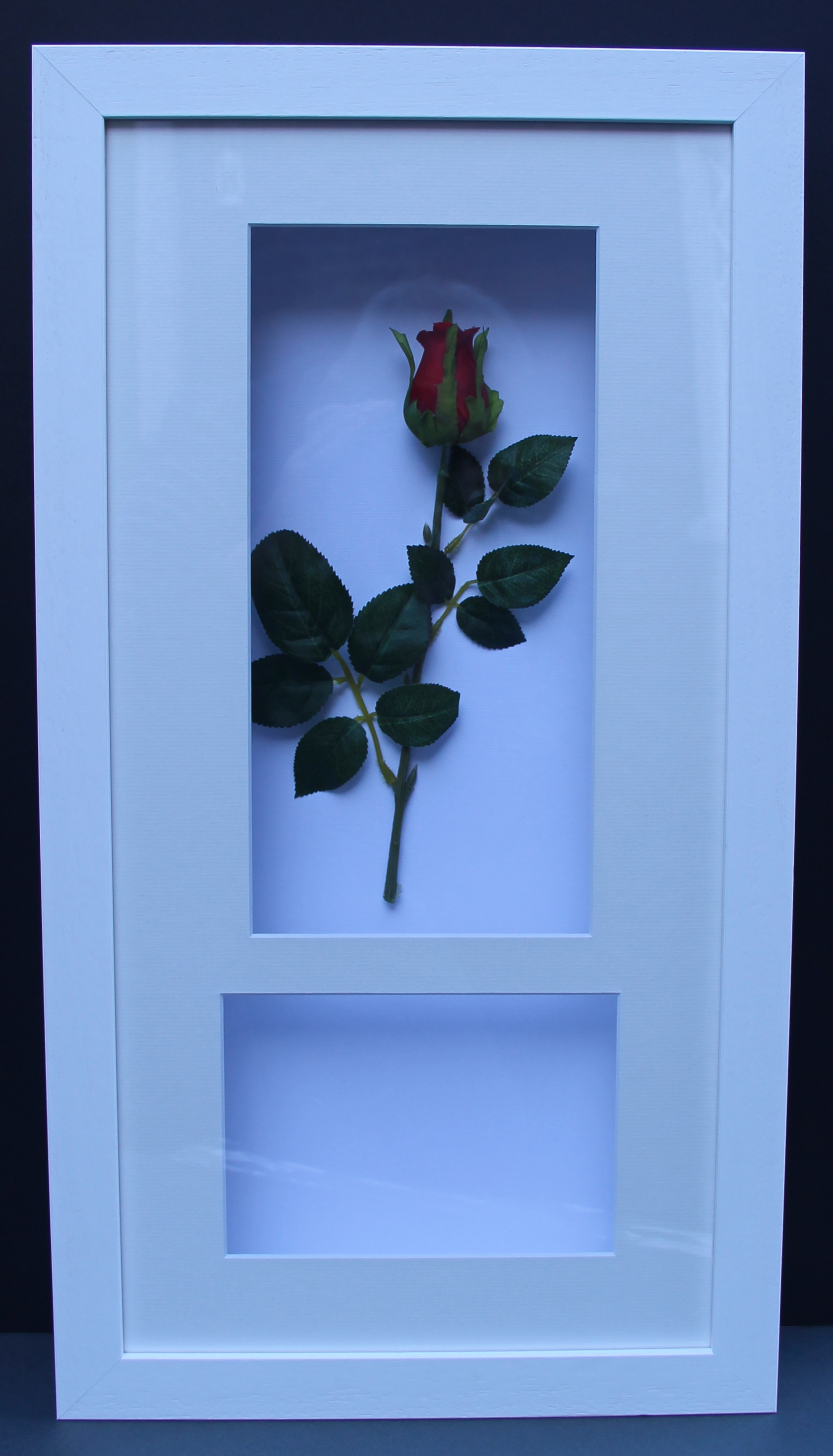 Rose with space for photograph
